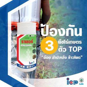 """ปกป้อง 3 พืชไร่เกษตรไทยตัวท็อป """"อ้อย มันสำปะหลัง ข้าวโพด""""ด้วยราเชอร์"""