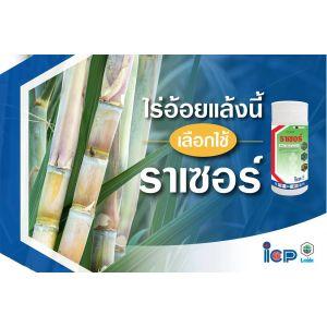 อ้อยกับความสำคัญทางเศรษฐกิจไทย