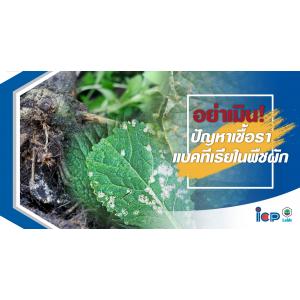 อย่าเมิน! ปัญหาเชื้อรา-แบคทีเรียในพืชผัก