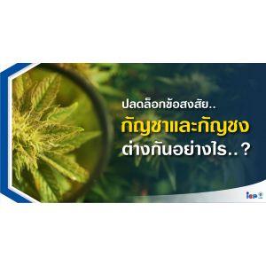 ปลดล็อกพืชที่น่าจับตามอง กัญชง Vs กัญชา