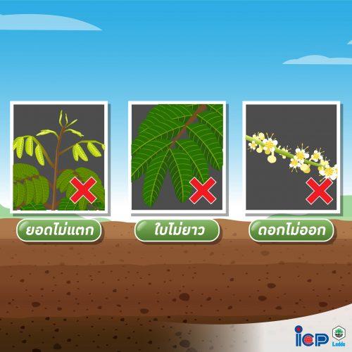 ใบพืช บอมส์ พลัส